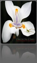 a bug's eye view of flowers art and science book by doctor gary greenberg